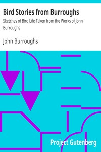 Cover of Bird Stories from BurroughsSketches of Bird Life Taken from the Works of John Burroughs