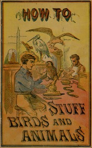 Cover of How to Stuff Birds and Animals A valuable book giving instruction in collecting, preparing, mounting, and preserving birds, animals, and insects