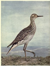 Birds Illustrated by Color Photography, Vol. 3, No. 4.