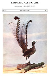 Cover of Birds and All Nature, Vol. 6, No. 5, December 1899 Illustrated by Color Photography
