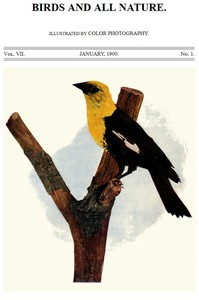 Cover of Birds and All Nature, Vol. 7, No. 1, January 1900 Illustrated by Color Photography