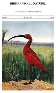 Cover of Birds and All Nature, Vol. 7, No. 4, April 1900