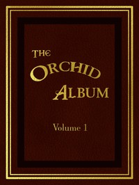 Cover of The Orchid Album, Volume 1 Comprising Coloured Figures and Descriptions of New, Rare, and Beautiful Orchidaceous Plants