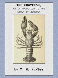 The Crayfish: An Introduction to the Study of Zoology.