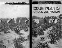 Drug Plants Under Cultivation