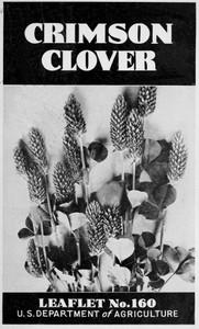 Crimson Clover [1938]