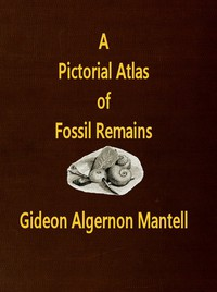 """Cover of A Pictorial Atlas of Fossil Remains, consisting of coloured illustrations selected from Parkinson's """"Organic remains of a former world,"""" and Artis's """"Antediluvian phytology."""""""