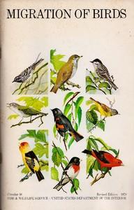 Migration of Birds (1979)
