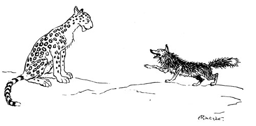 THE FOX AND THE LEOPARD
