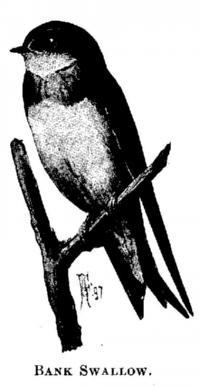 b444521162 The Project Gutenberg eBook of Citizen Bird