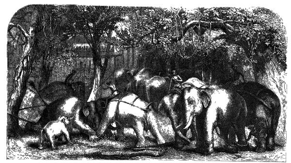 The Project Gutenberg eBook of Ceylon  an Account of the Island ... 98f59cb213a