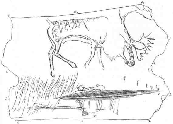 Fig. 14.  Palæolithic sketch - a reindeer