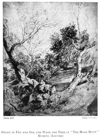 """Plate LVI. STUDY IN PEN AND INK AND WASH FOR TREE IN """"THE BOAR HUNT"""" RUBENS (LOUVRE) Photo Giraudon"""