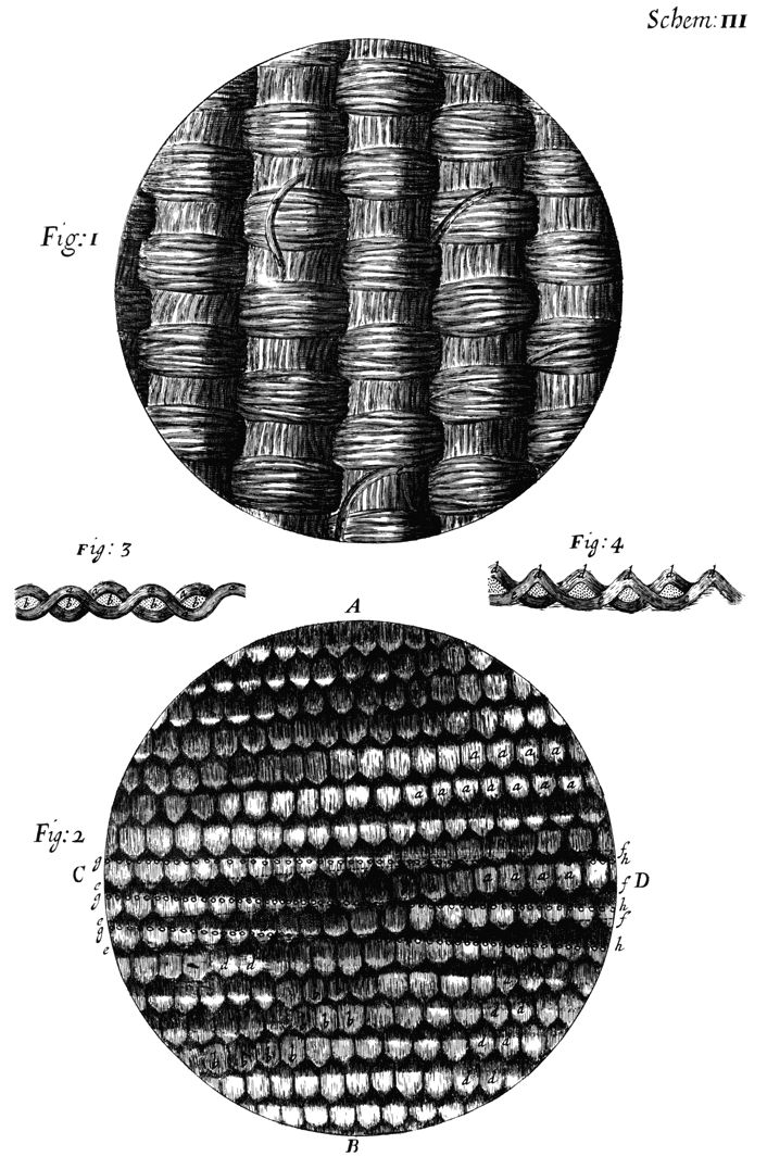 Micrographia by Robert Hooke, 1665 - The British Library