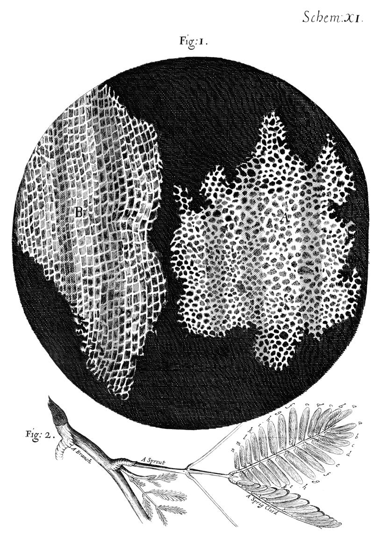 Micrographia (English Edition) eBook: Hooke , Robert ...