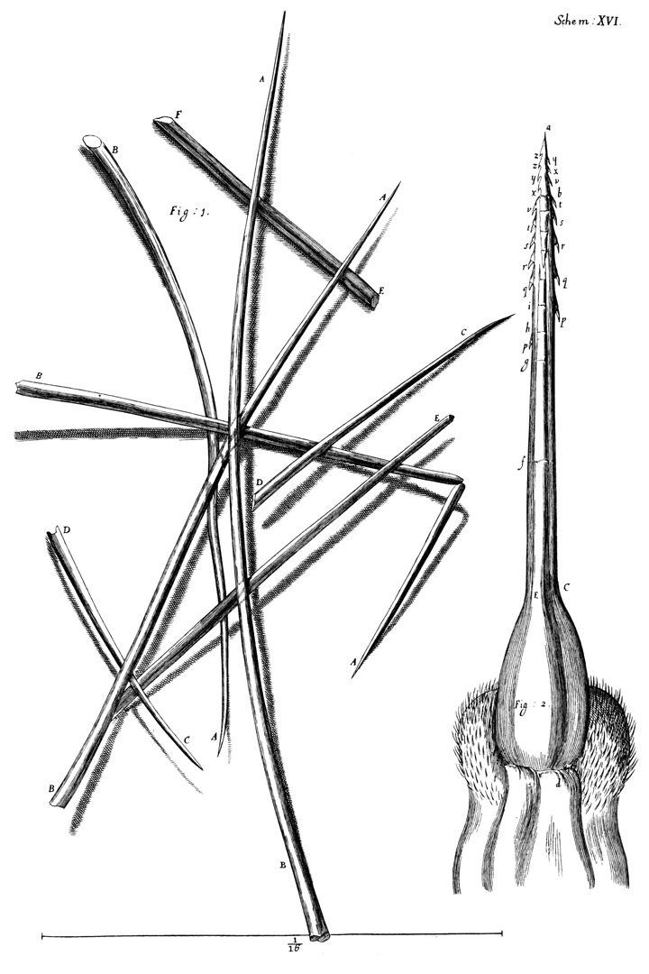 Micrographia, Or, Some Physiological Descriptions Of ...