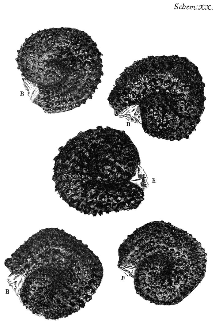 Micrographia by Robert Hooke - Free Ebook - …