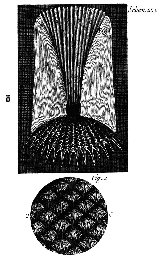 Micrographia Tabled Illustrated By Robert Hook Murat Ukray