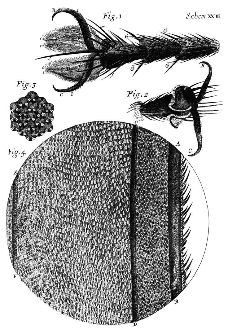 The Project Gutenberg eBook of Micrographia, by …
