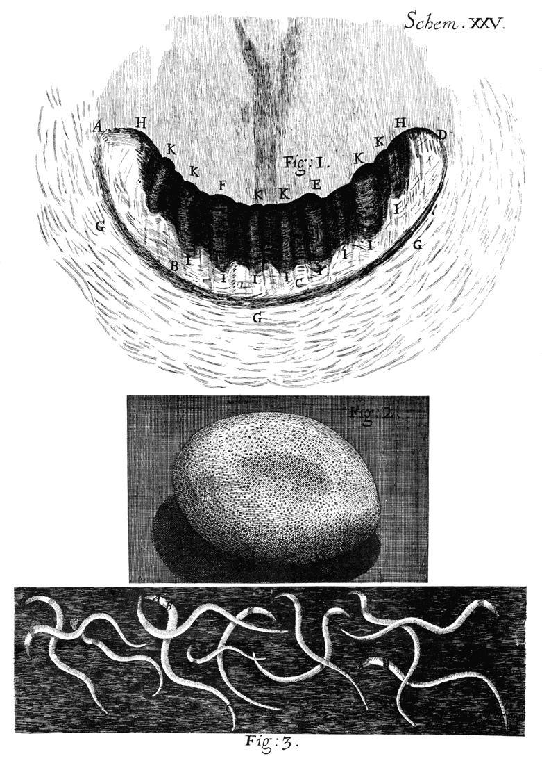 Micrographia by Robert Hooke - Free Ebook - Project Gutenberg