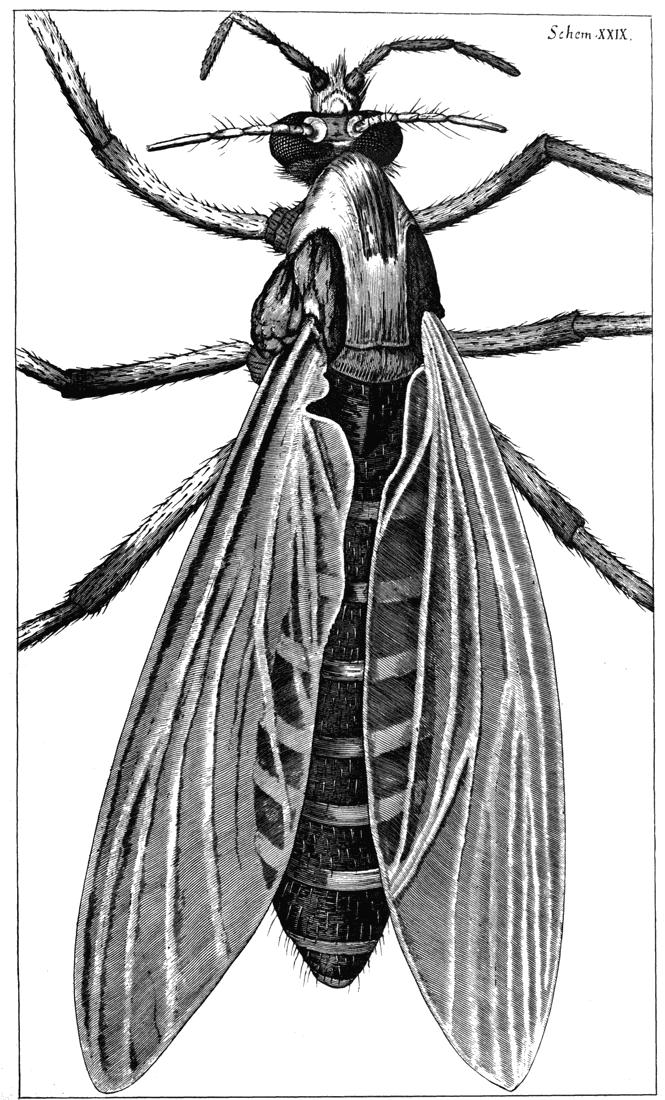 Micrographia - Kindle edition by Robert Hooke . Literature ...