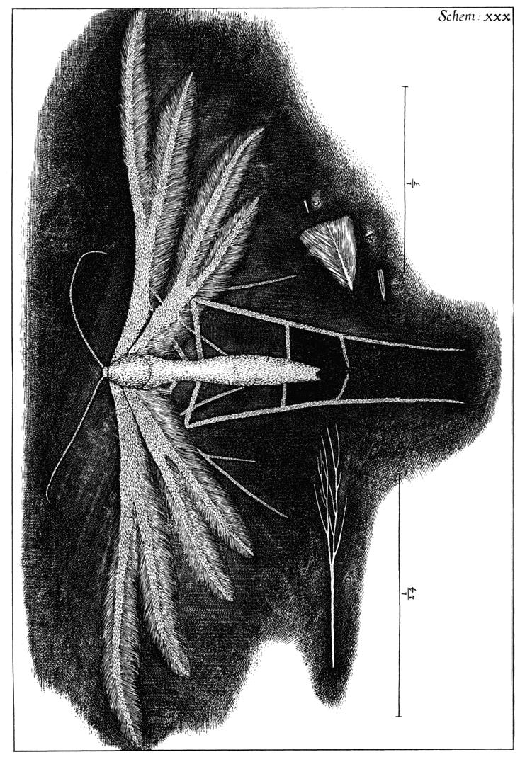 Micrographia: The Perfect Library, Hooke, Robert: Amazon ...