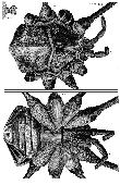 Micrographia eBook: Hooke, Robert: Amazon.co.uk: Kindle Store