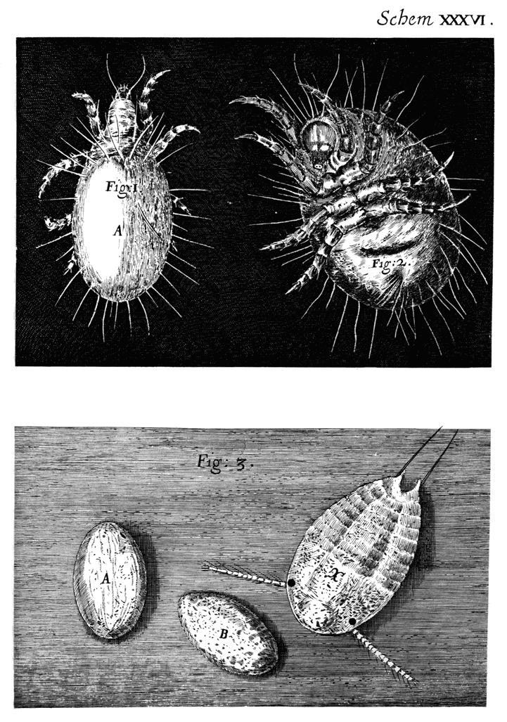 Robert hooke micrographia online dating. It is also ...