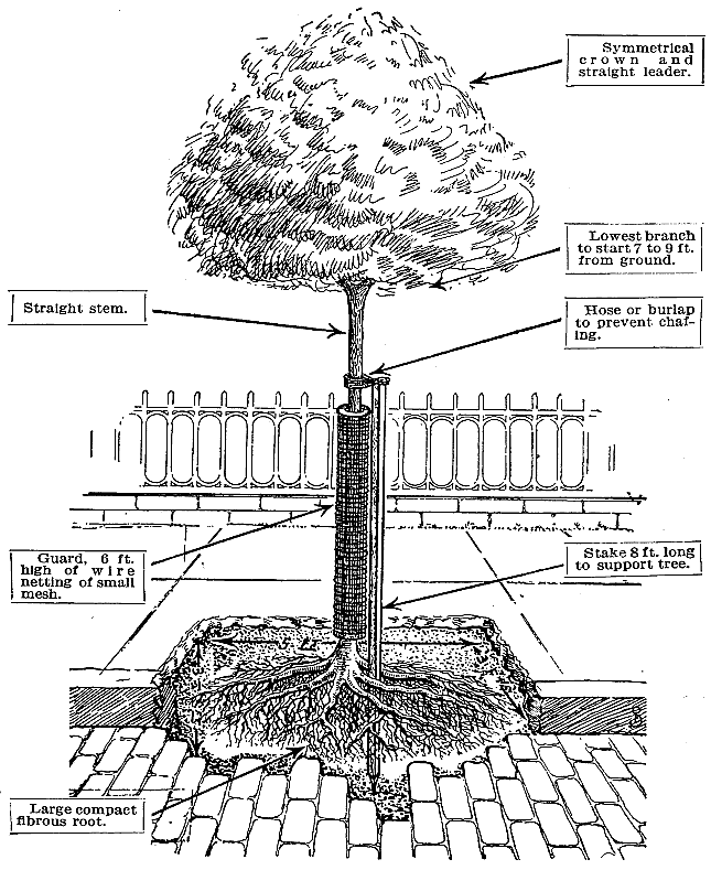 The Project Gutenberg Ebook Of Studies Of Trees By J J Levison M F