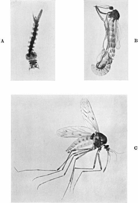 The Project Gutenberg Ebook Of The Life Story Of Insects By Geo H