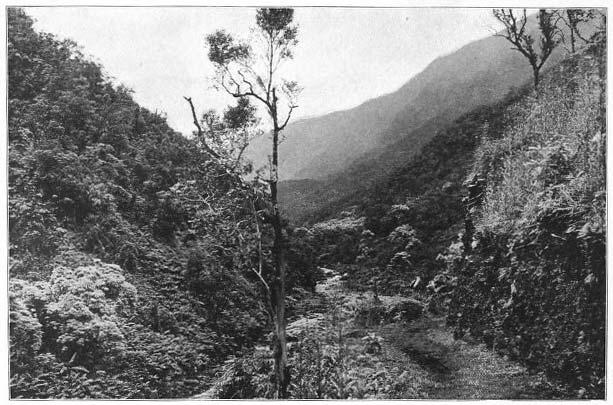 View in Wainiha Valley, Kauai.