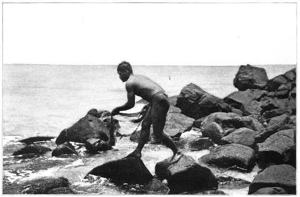 Hawaiian Fisherman Using the Throw-Net.