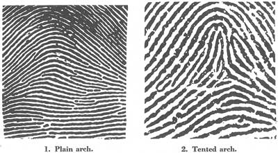 What Are the Different Class Characteristics of a Fingerprint? | eHow
