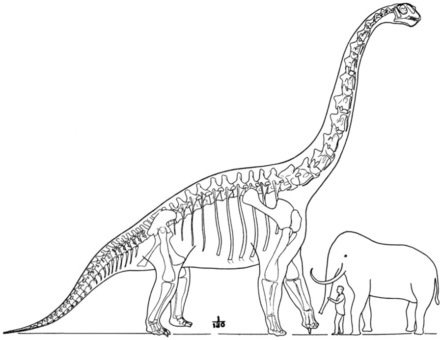 the project gutenberg ebook of dinosaurs by william diller matthew Dinosaur Rock the largest known dinosaur sketch reconstruction of brachiosaurus from