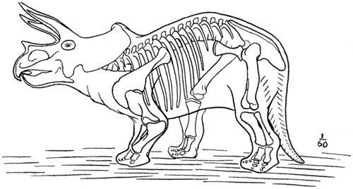 skletal fossil coloring pages-#2