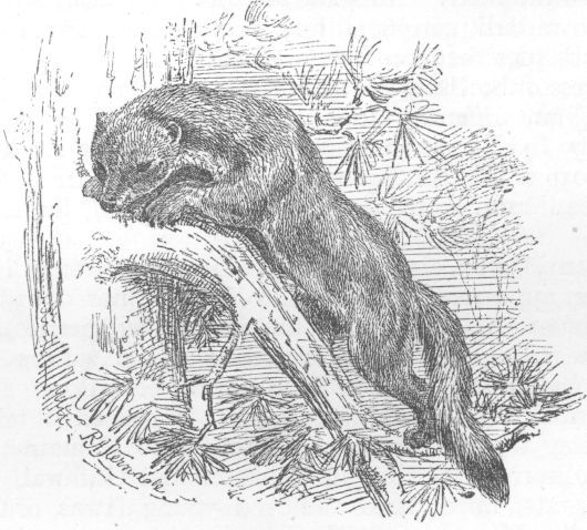 The Project Gutenberg e-Book of Natural History of the