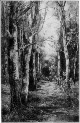 The Woods in Spring