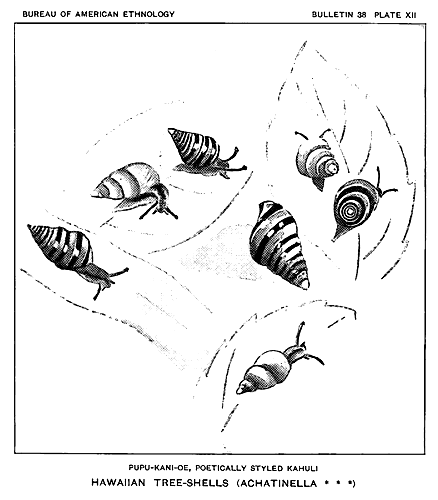 The project gutenberg ebook of unwritten literature of hawaii par kahuli is a fanciful name applied to the beautiful and unique genus of tree shells achatinella plate xii that inhabit the hawaiian woods fandeluxe Gallery