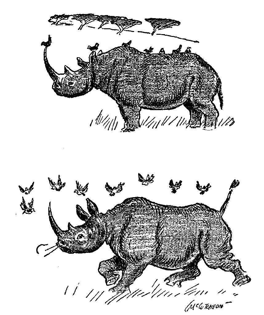 Rhinoceros and Birds