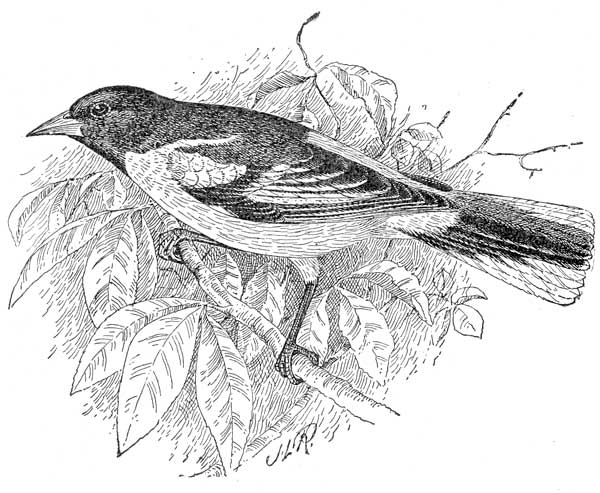 The Project Gutenberg EBook Of Bird Day How To Prepare For It By