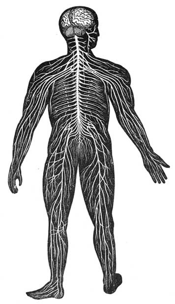 From Furneaux's Elementary Physiology