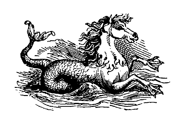 A hippocamp