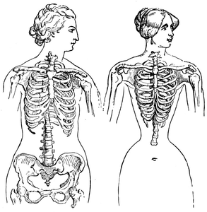 of Medicis.The same in a fashionable corset-wearing lady of to-day