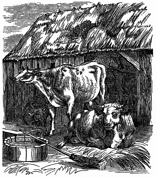 The Project Gutenberg Ebook Of Cattle And Their Diseases By Robert