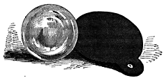 A small circular object.