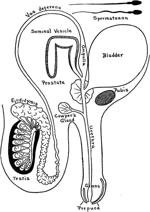 The Project Gutenberg eBook of The Biology, Physiology and Sociology ...