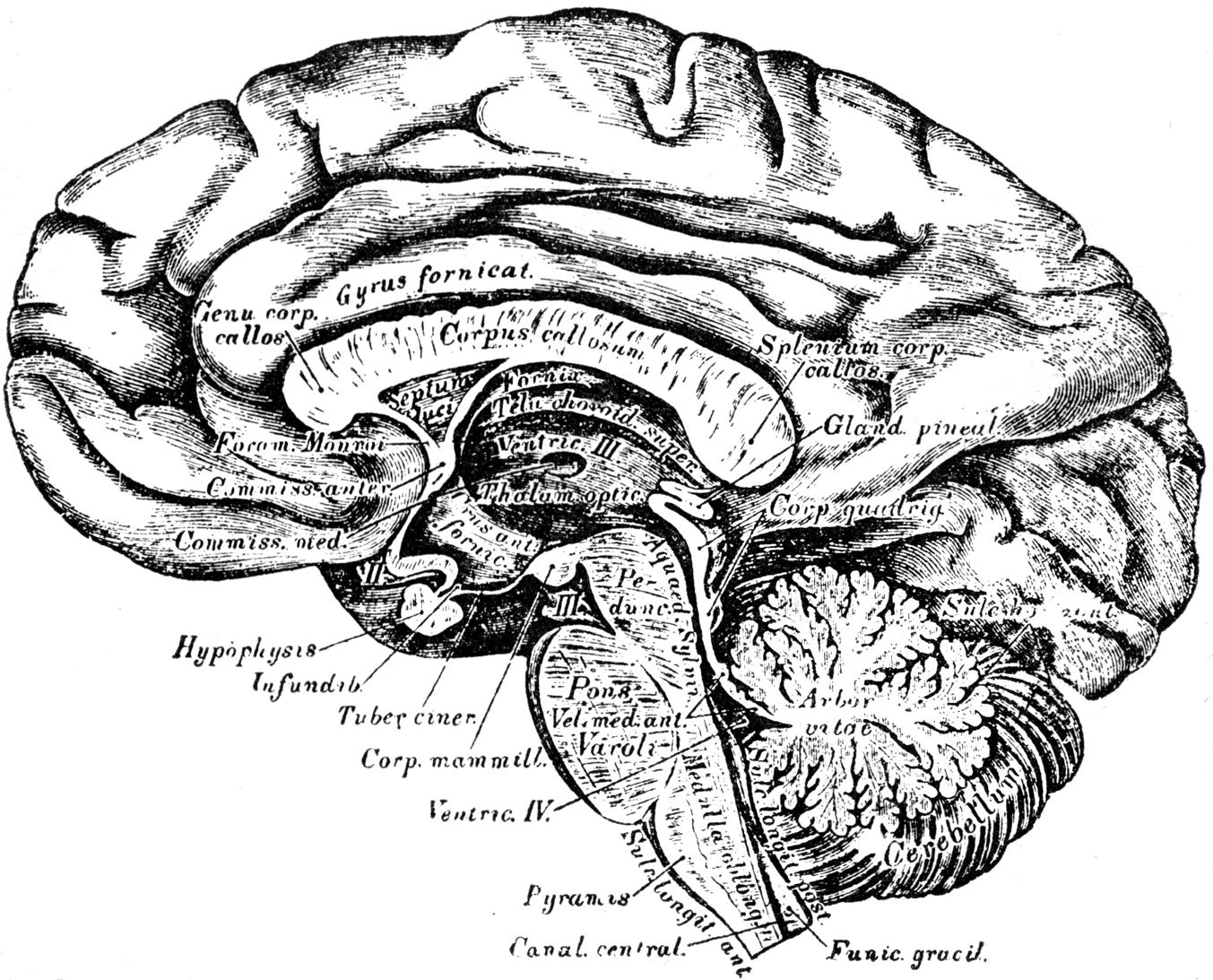 Buchanan\'s Journal of Man, April 1887.