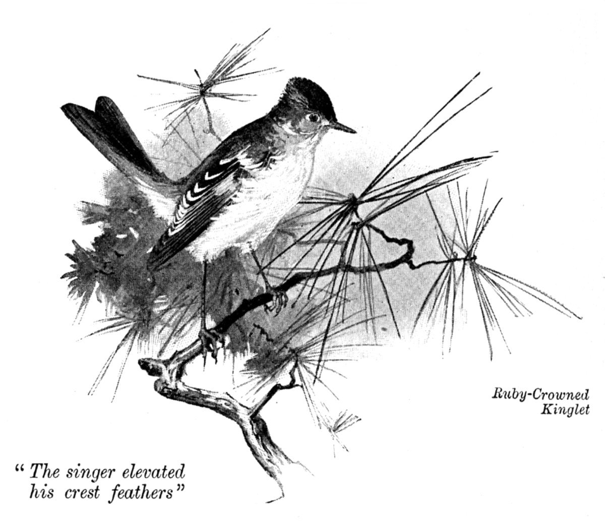 The Project Gutenberg EBook Of Birds Rockies By Leander