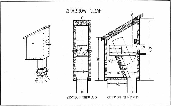 House Sparrow Trap Sparrow Trap