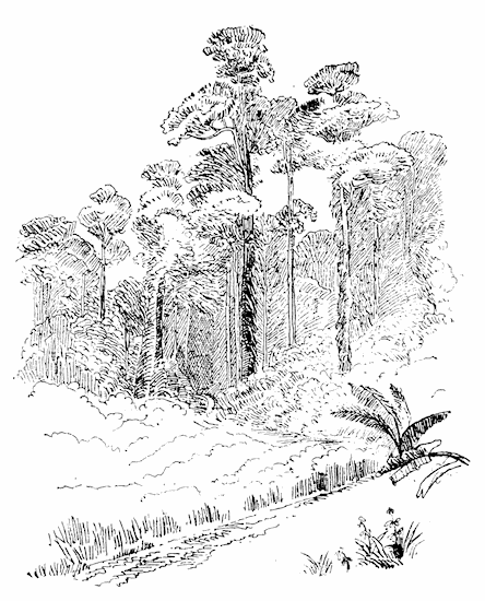 the project gutenberg ebook of a visit to java by w basil worsfold Mount Fuji rosamala trees
